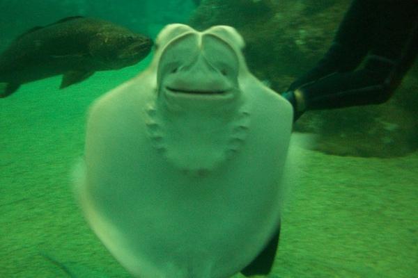 0605 bike 魟魚 with smile