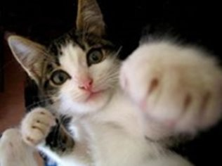 PAW-cat