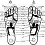 腳底病理反射區部位圖-3.jpg