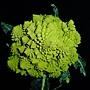 羅馬花椰菜 1040310_8.JPG