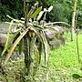 三角柱 1030623 植物園.jpg