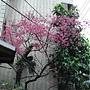櫻花950216-1樂天宮路上.JPG