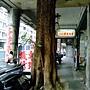 黑板樹(屋包樹) 1040209_4 林森南路.JPG