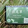 狼尾草 1051103_7 植物園.JPG