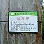 粗皮桉(彩虹桉) 1051103_4 植物園桃金孃科.JPG