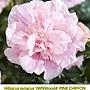 Hibiscus syriacus-JWNWood4-1.jpg