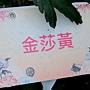 菊花-金莎黃.jpg
