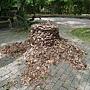 無根的樹-裝買藝術 1070504_5 台北植物園.JPG