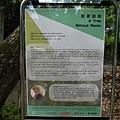 無根的樹-裝買藝術 1070504_6 台北植物園.JPG