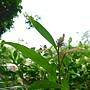 易生木 1070504_2 台北植物園.JPG
