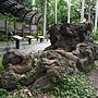 金龜樹 1070703_1 台北植物園.JPG