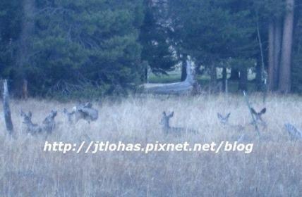 Plumas County CA-32.JPG