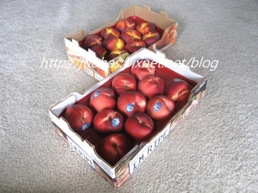 夏日水果盛宴-2.jpg