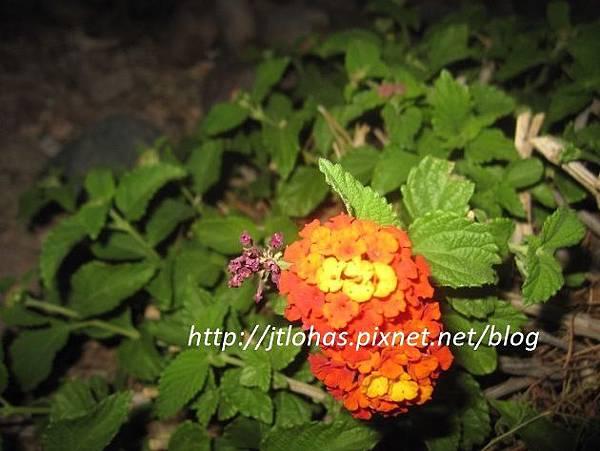 April Showers Bring May Flowers-9.JPG