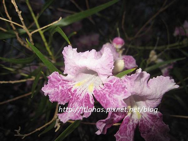 April Showers Bring May Flowers-10.JPG