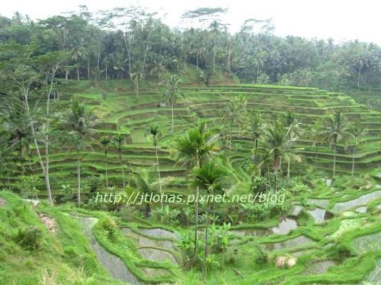 Bali Island Tour-1.jpg