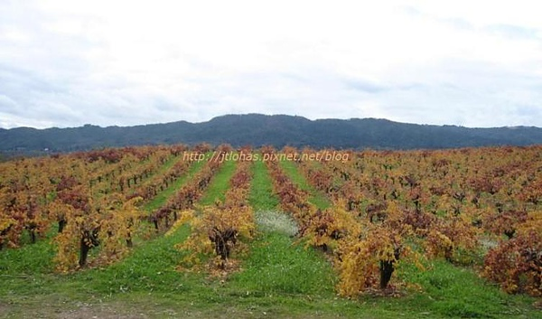 Sonoma Wine Country-1.jpg