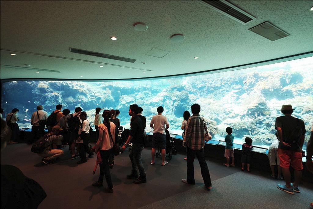沖縄美ら海水族館_15.png