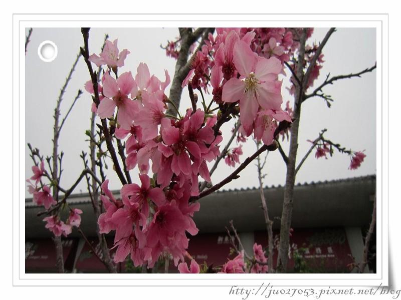 PhotoCap_IMG_0577(001).jpg