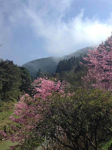 櫻花1.jpeg