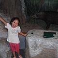 Jolie和山豬標本