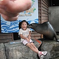 Jolie海獅近身大體驗