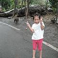 Jolie開心和彌猴合影