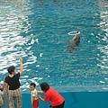 觀眾阿嬤教海豚玩呼拉圈