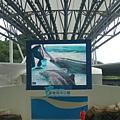 大銀幕上的海豚