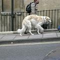 這狗看起來超好笑的