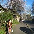 20070303 Bristol 路邊開花的樹
