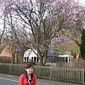 路邊的櫻花實在是很美啊