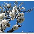 20070321 BristolCity 公園邊的樹