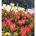 20070408Bristol往市中心廣場的花