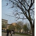 20070415Collage Green不知道位什麼鞋子被吊在樹上