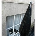 20070703Bristol 夾在窗邊的貓
