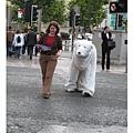 20070703Bristol 北極熊過馬路