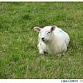 20070705 好笑的羊