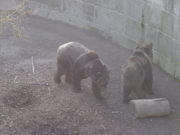 伯恩名產--熊