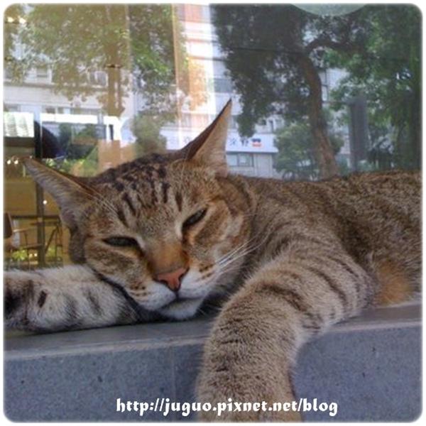 路邊貪睡貓_9807043