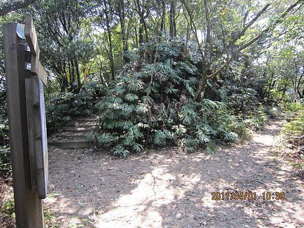 猴山岳、二格山 (60).JPG