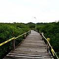 Papago下面的步道兩旁有點類似我們的紅樹林