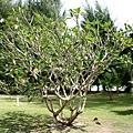 另一顆造型特殊的植物