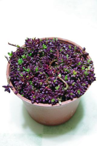 遲來的新年禮物開箱→紫米飯