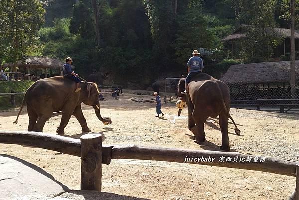 清邁/Maesa Elephant Camp