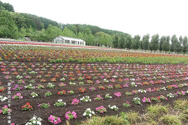北海道/富田農場