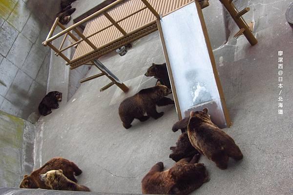 北海道/熊牧場