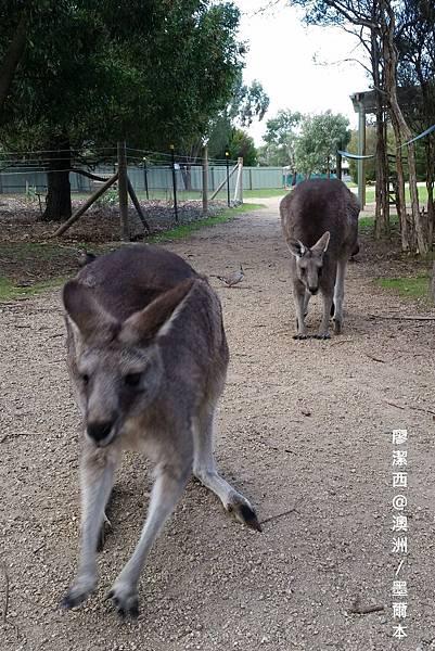 墨爾本/Moonlit Sanctuary Wildlife Conservation Park