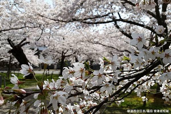 2016/04日本/福島 會津若松城