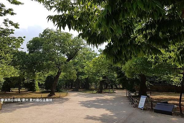 2017/07韓國/慶州 雞林